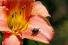 beetle_dsc5205